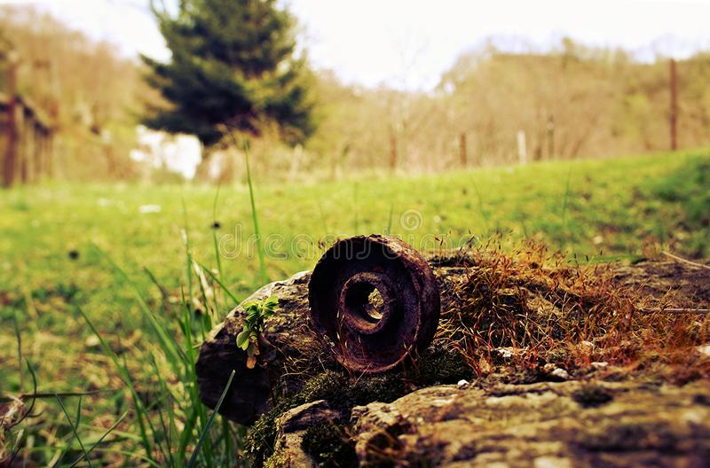 晚年和自然 库存照片