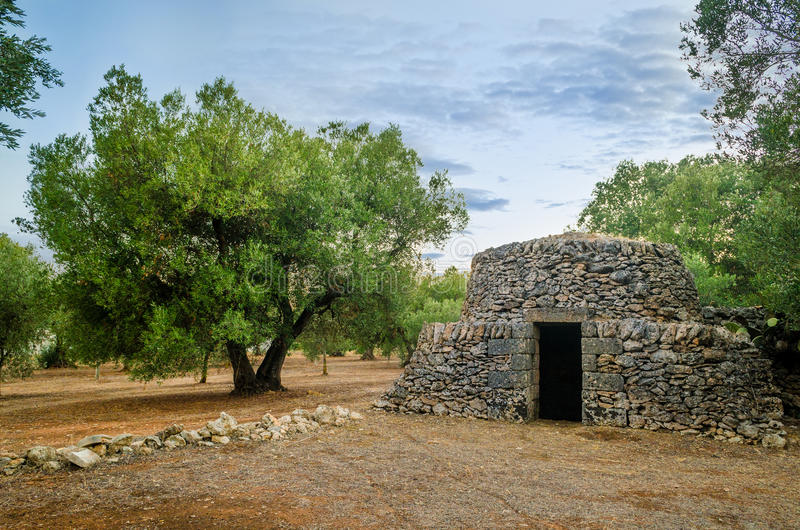普利亚、老trullo和橄榄树 免版税图库摄影