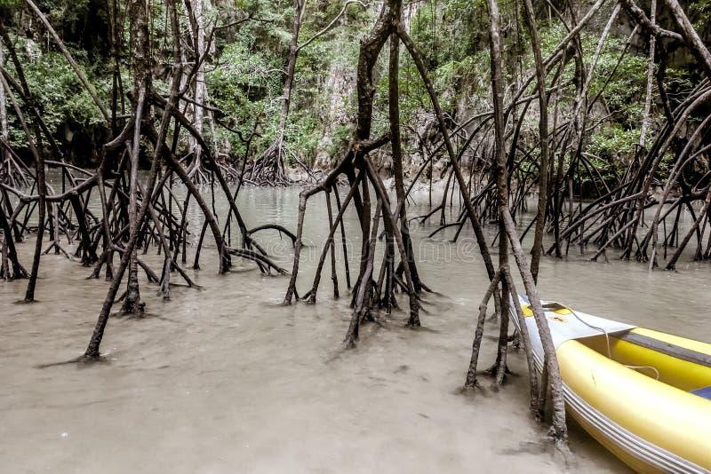 普吉岛泰国 库存图片