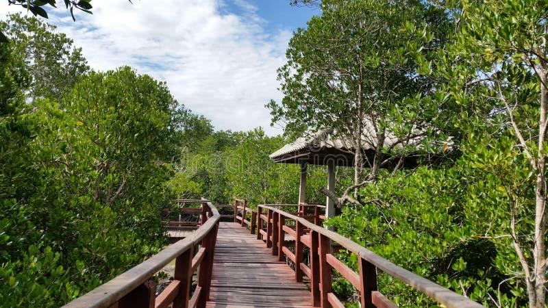 普吉岛美洲红树森林 库存图片