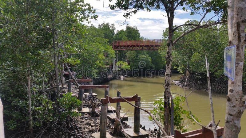 普吉岛美洲红树森林 免版税图库摄影