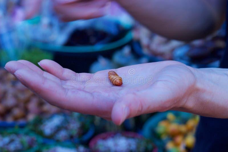 普吉岛,泰国:手吃的藏品幼虫在食物市场上 免版税图库摄影