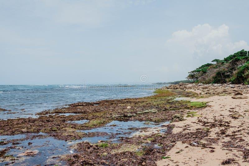 普拉塔港,多米尼加共和国的美好的本质 库存图片
