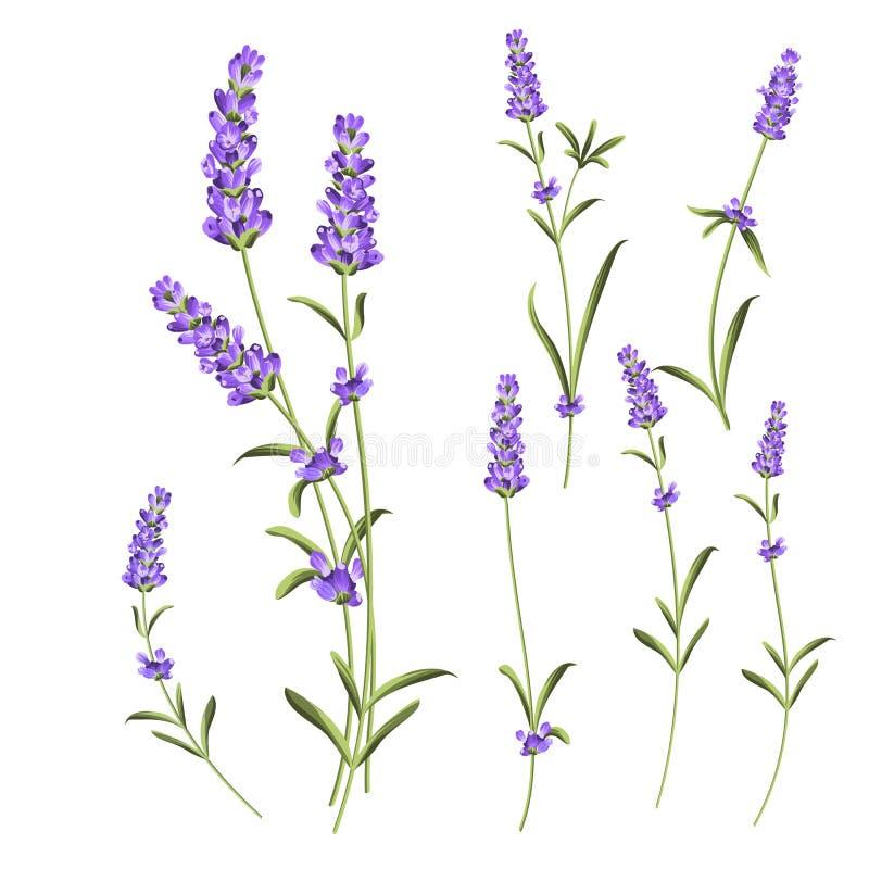 普罗旺斯花汇集 套淡紫色开花元素 紫罗兰色花成套工具 时尚夏天印刷品捆绑 要素 库存例证