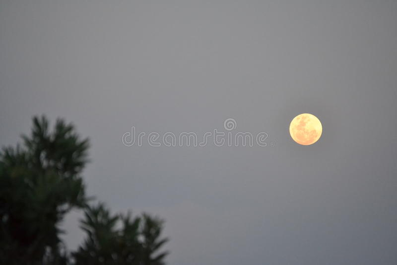普罗梯亚木月亮 库存照片