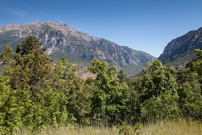 普罗沃峡谷和在前面的充满活力的绿色植物树美好的风景视图与浅兰的天空的 图库摄影
