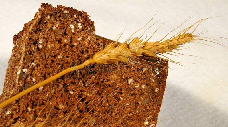 普通小麦 免版税库存照片