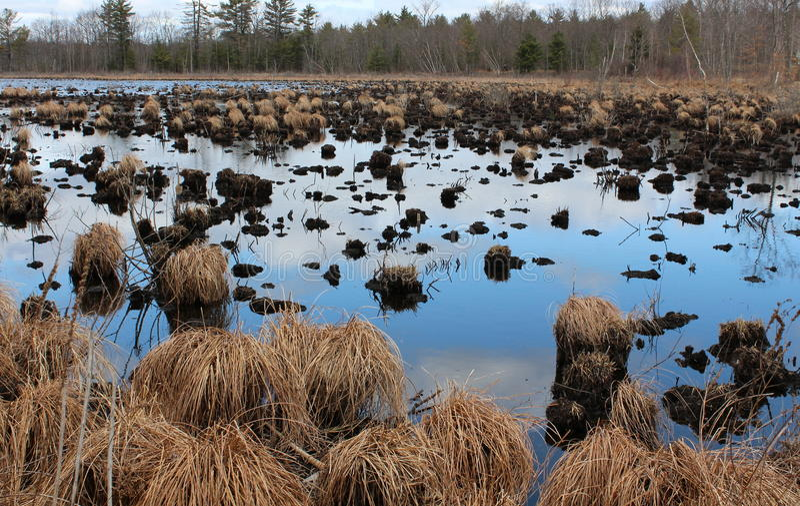 Download 普通植被在危险的沼泽地 库存图片. 图片 包括有 保护, 沼泽地, 种类, 乡下, 教育, 沼泽, bogart - 30338923