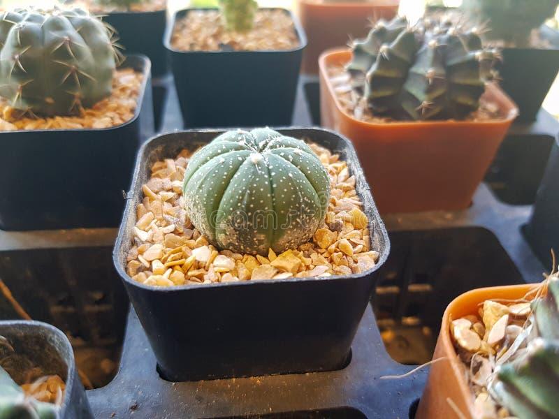 普遍的室内植物元素和多汁植物玫瑰华饰品种包括别针坐垫仙人掌现实收藏 免版税库存图片