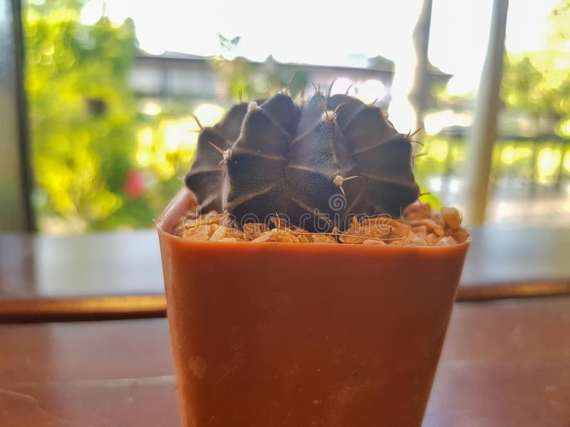 普遍的室内植物元素和多汁植物玫瑰华饰品种包括别针坐垫仙人掌现实收藏 库存图片