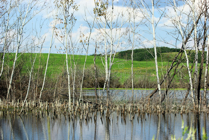 Download 普遍的树池塘 库存图片. 图片 包括有 自然, 风景, 叶子, 沼泽地, 普遍, beauvoir, 农村 - 72368659