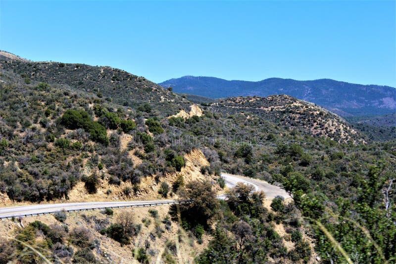 普里斯科特国家森林,亚利桑那,美国 免版税库存照片