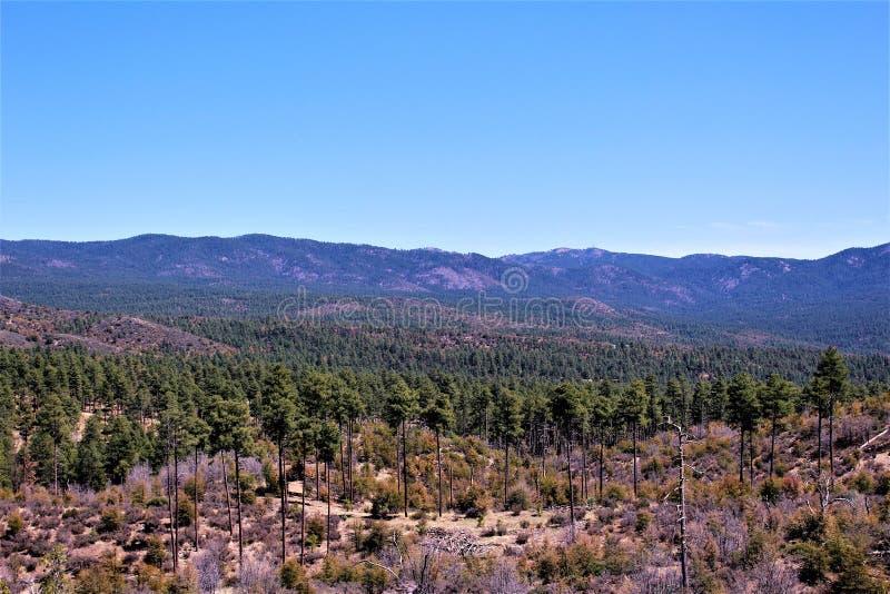 普里斯科特国家森林,亚利桑那,美国 图库摄影