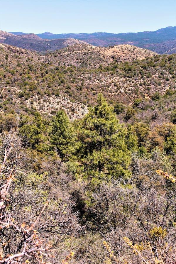 普里斯科特国家森林,亚利桑那,美国 免版税图库摄影
