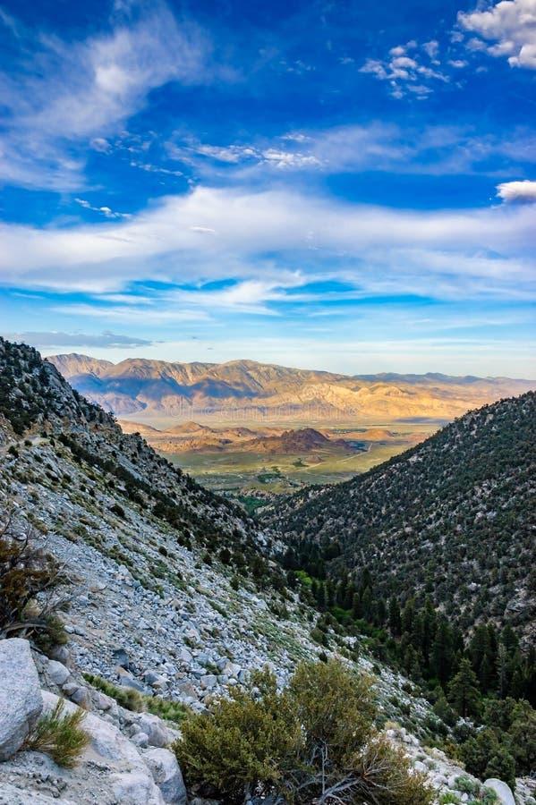 景色从路到Mt惠特尼,孤立杉木,加州 库存照片