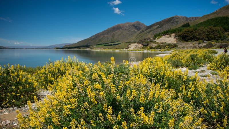 晴天Wanaka湖,南岛,新西兰。 免版税库存图片