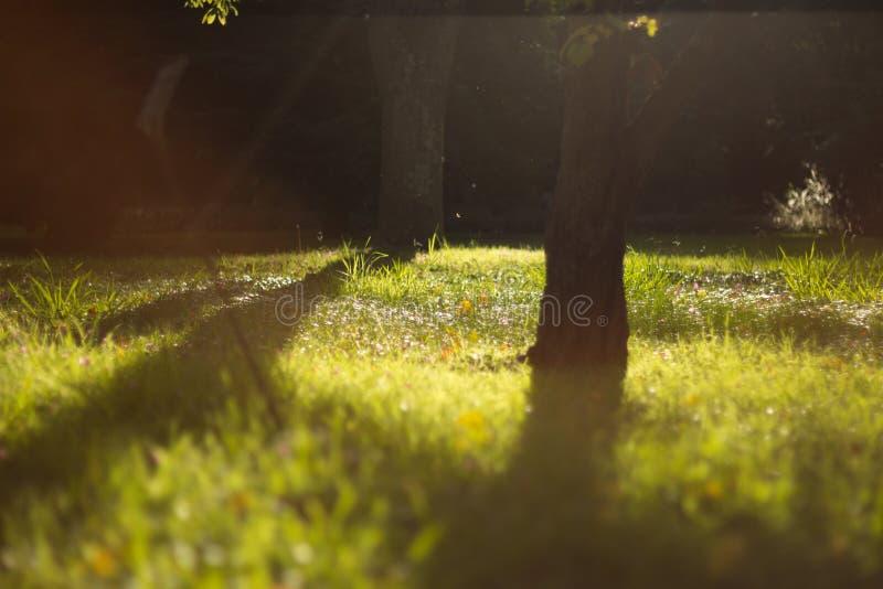 晴朗梦想的草坪 库存图片