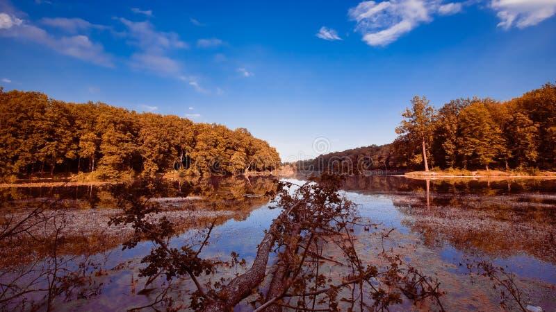 晴朗的夏天午间的大自然森林湖与深蓝天,仍然浇灌表面,自然全景背景照片 库存照片