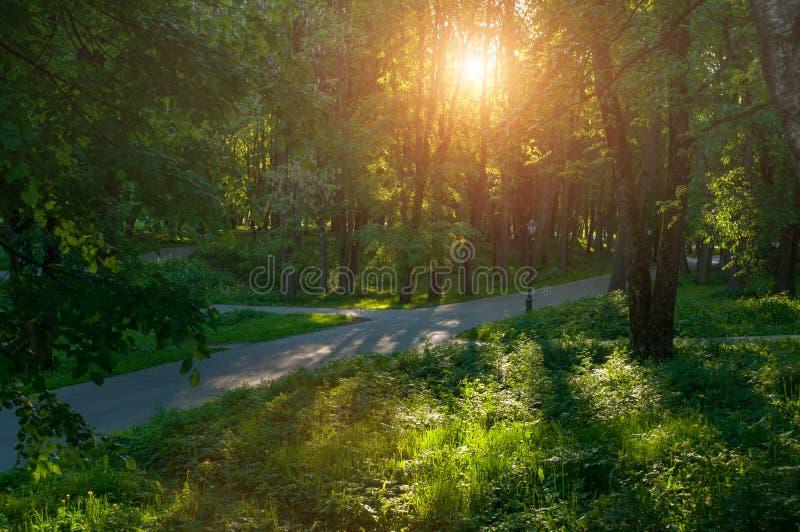 晴朗的夏天风景-夏天在软的日落光下的公园胡同 库存图片