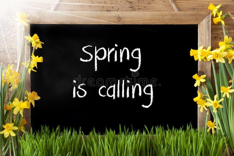 晴朗的水仙,黑板,文本春天叫 向量例证
