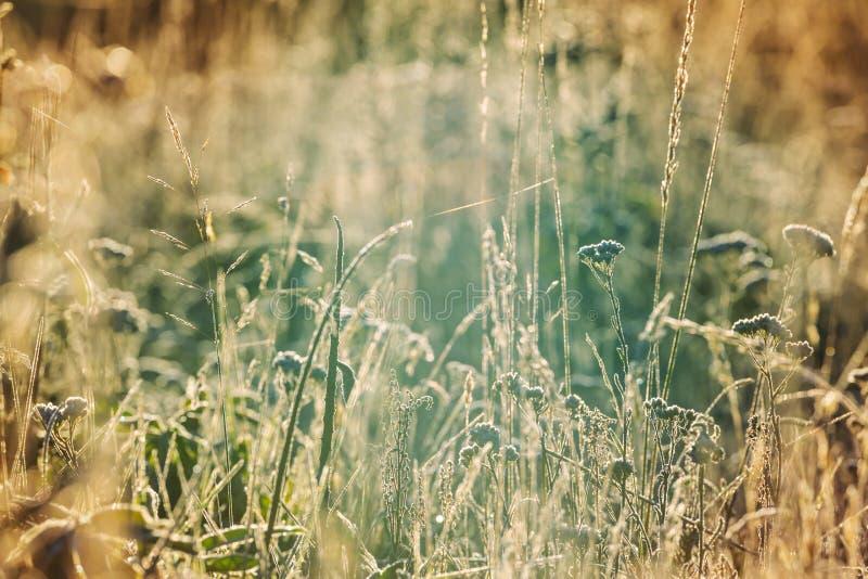 晴朗的草甸 图库摄影