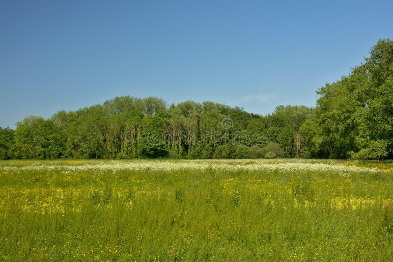 晴朗的豪华的绿色沼泽风景和forestin佛兰芒乡下 免版税库存图片