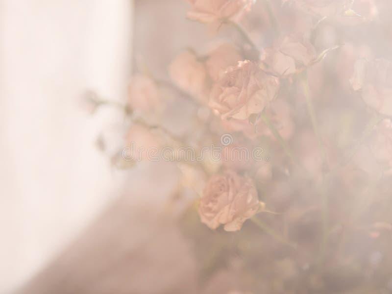 晴朗的轻的淡色问候的花玫瑰色花束背景 免版税库存图片