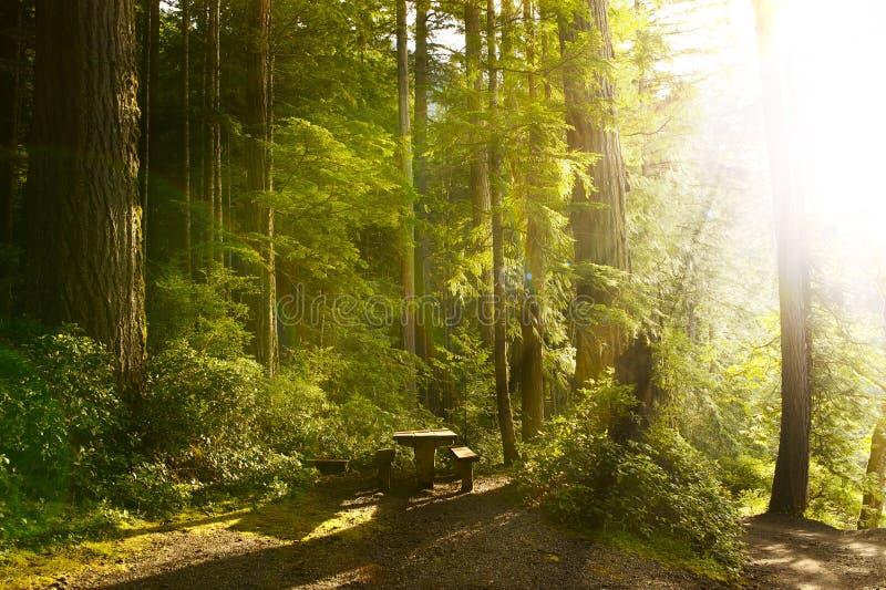 晴朗的雨林 图库摄影