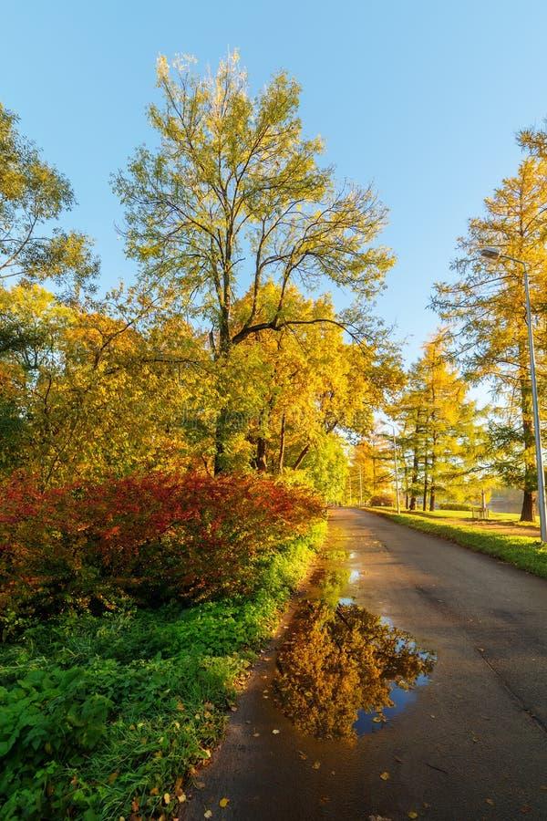 晴朗的风景在秋天 库存图片