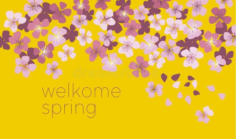 晴朗的黄色颜色装饰樱花 皇族释放例证