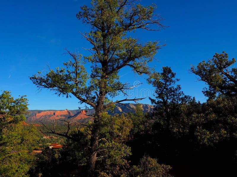 晴朗的Sedona天:红色岩石和蓝天 免版税库存图片
