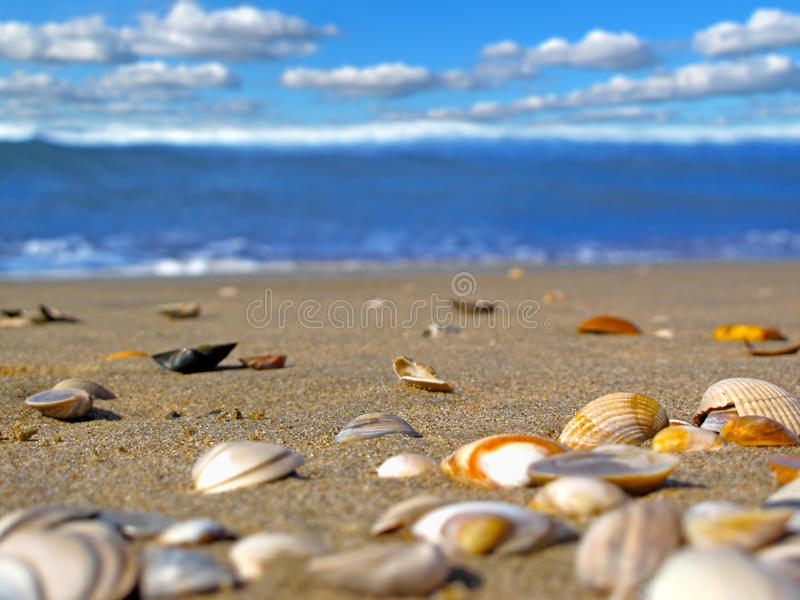 晴朗背景的海滩 免版税库存照片
