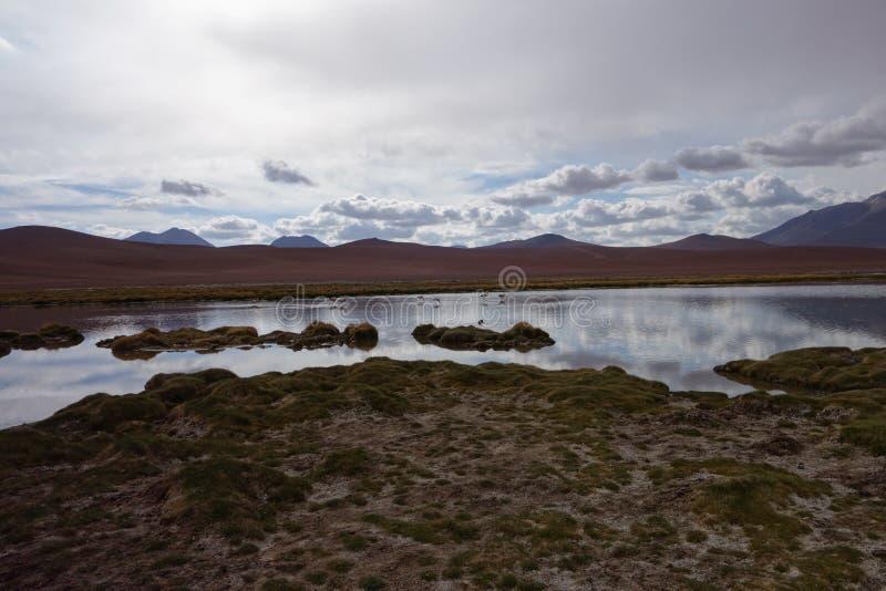 智利沙漠 免版税图库摄影
