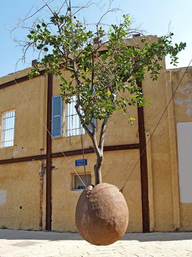 暂停的橙树 Yaffo,以色列 免版税库存照片