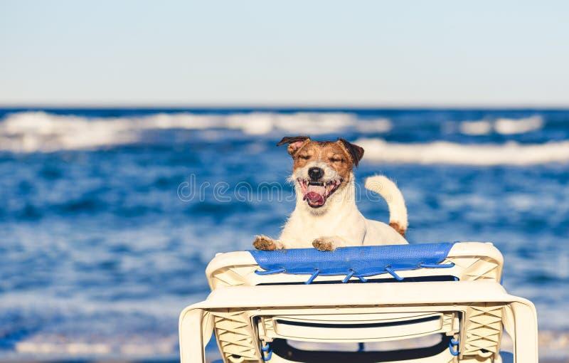 暑假与使用在海海滩的愉快的满足的狗的假日概念在晒黑的床上得到 免版税库存照片
