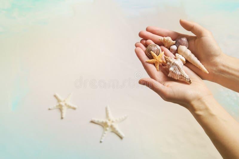 暑假概念:拿着壳和海星在Th的手 库存图片