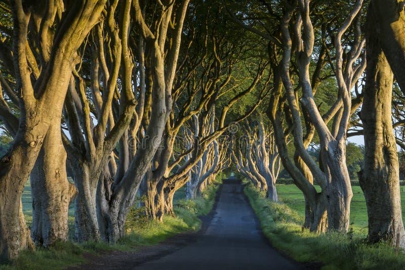 黑暗修筑树篱-安特里姆郡-北爱尔兰 免版税库存图片