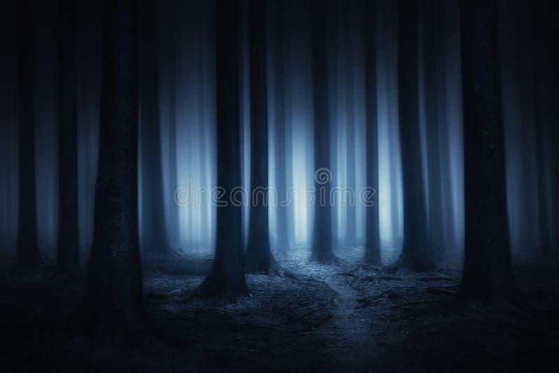 黑暗和可怕森林在晚上 免版税库存照片