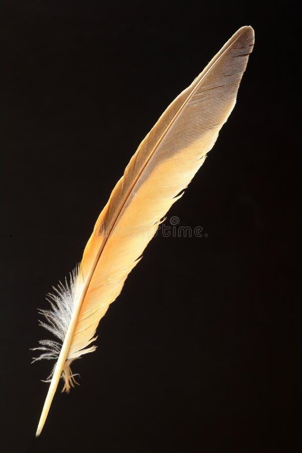暗淡的鹅口疮羽毛  免版税库存图片
