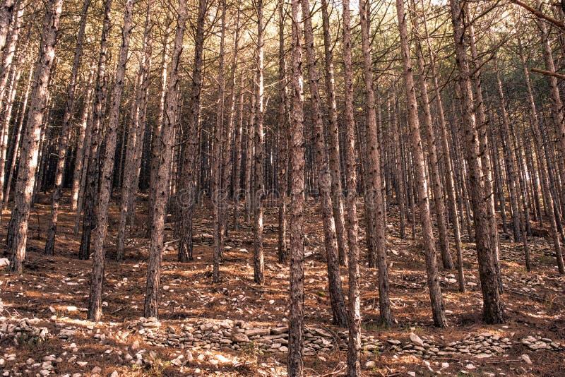 黑暗的木头在意大利 免版税库存照片