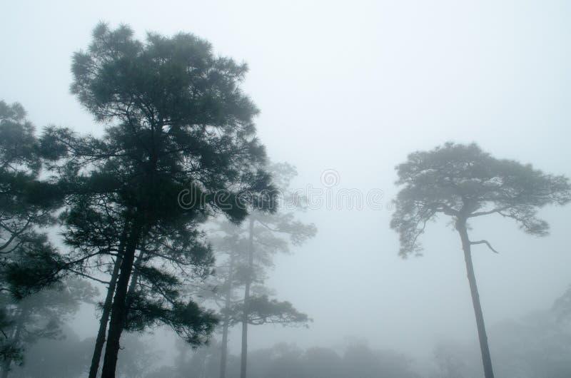 黑暗的杉树森林 图库摄影