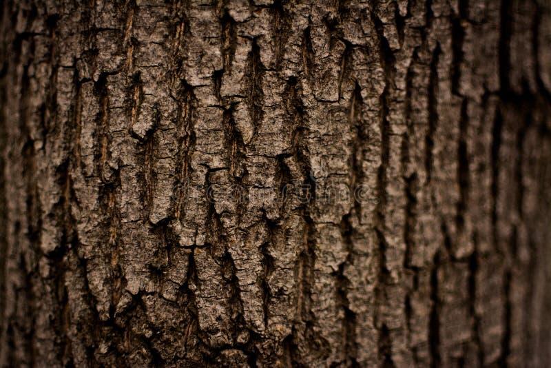 黑暗的树皮纹理 免版税库存照片