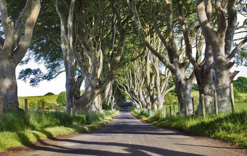 黑暗的树篱,山毛榉树老大道, Armoy,安特里姆,北爱尔兰 免版税库存照片