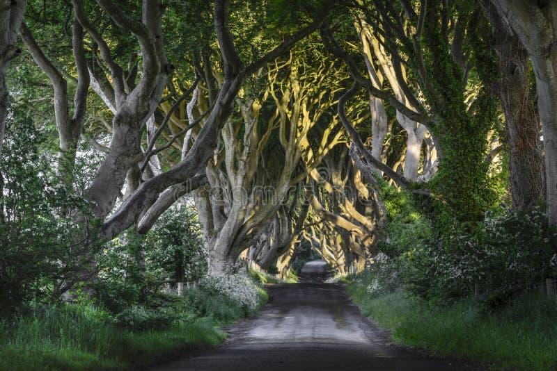 黑暗的树篱, N.爱尔兰 库存照片