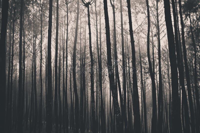 黑暗的森林 免版税图库摄影