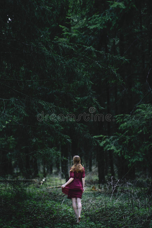 黑暗的深森林 库存图片