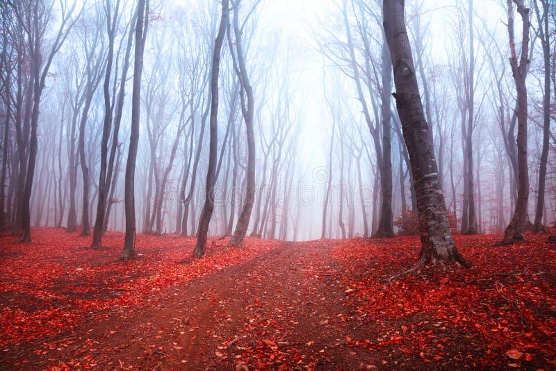 黑暗的神秘的森林 库存图片