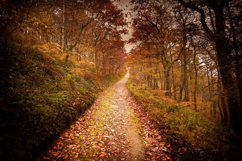 黑暗的秋天森林路 库存图片