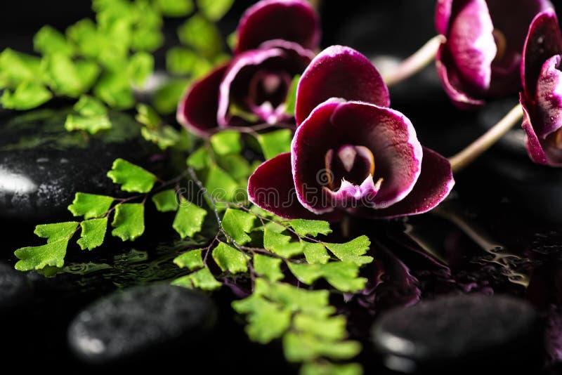 黑暗的紫色兰花花和蕨枝杈美好的温泉设置  免版税库存图片