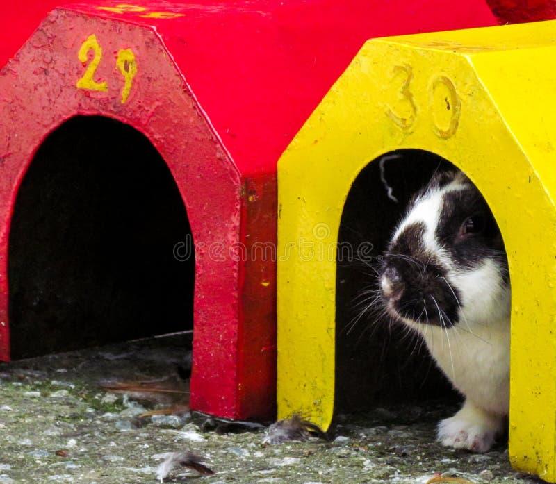 暗藏的兔子 免版税库存照片